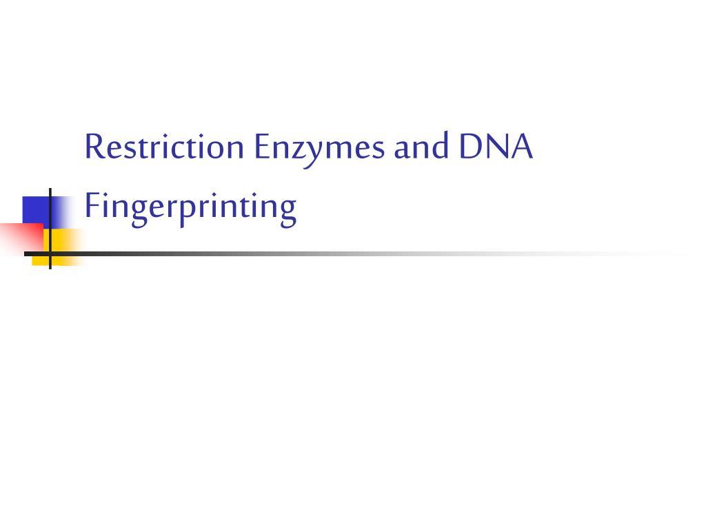 restriction enzymes and dna fingerprinting l.