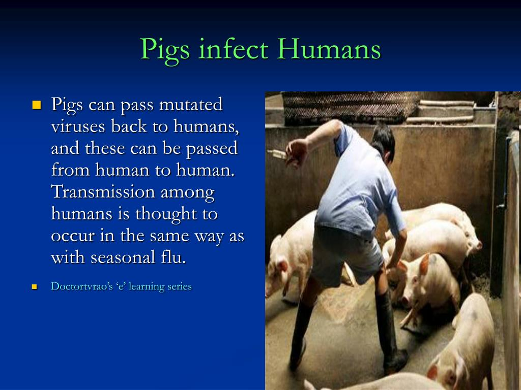 Pigs infect Humans