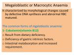 megaloblastic or macrocytic anaemia