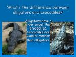 what s the difference between alligators and crocodiles