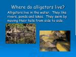 where do alligators live