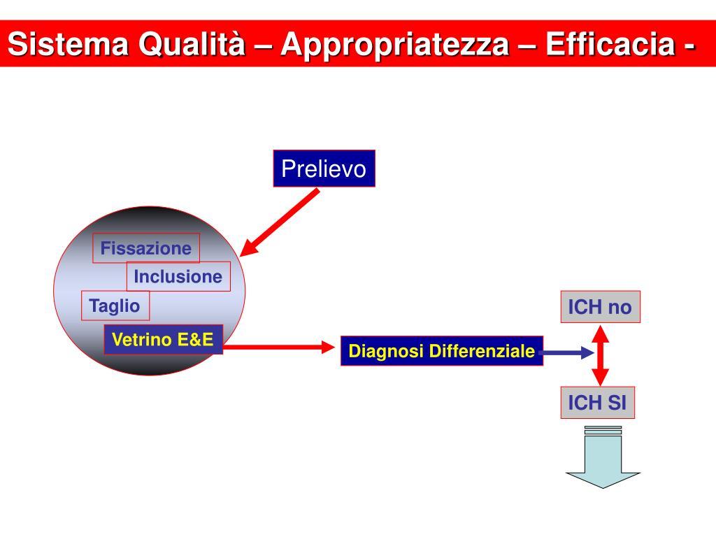 Sistema Qualità – Appropriatezza – Efficacia -