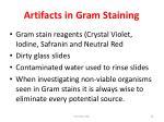 artifacts in gram staining