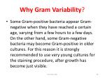 why gram variability