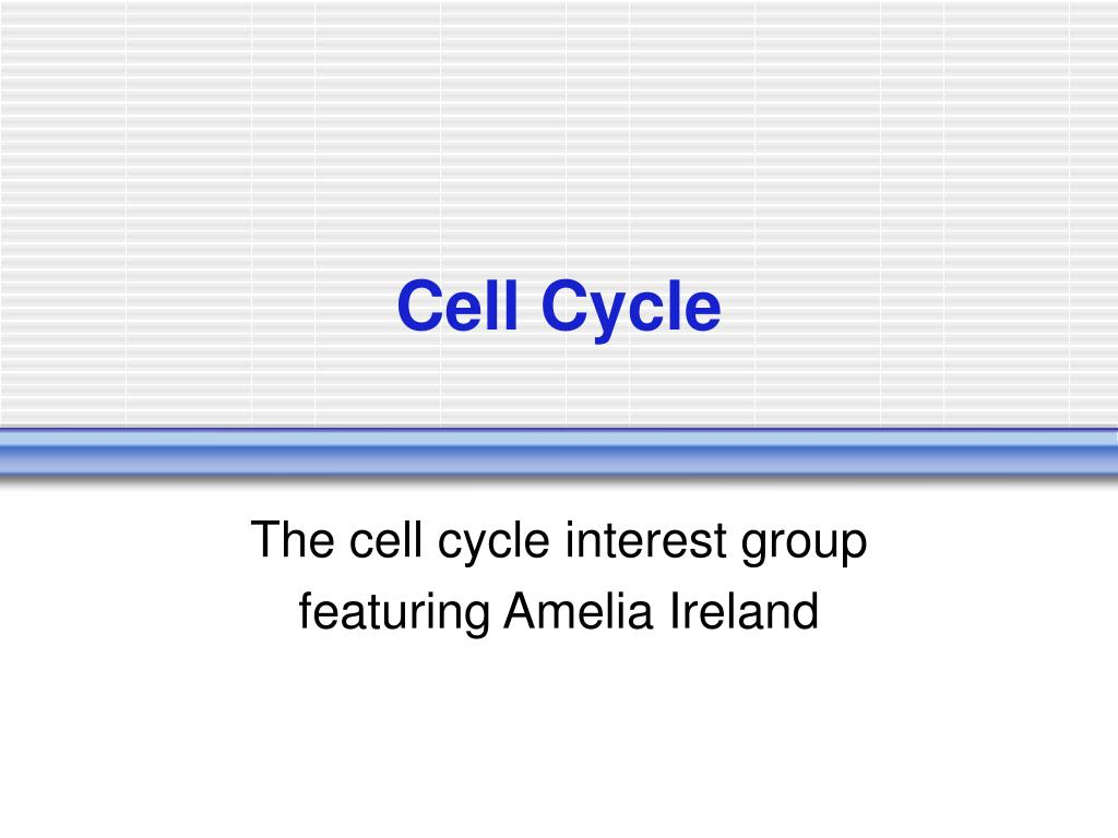cell cycle l.