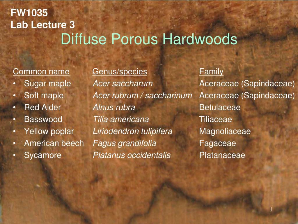 diffuse porous hardwoods l.