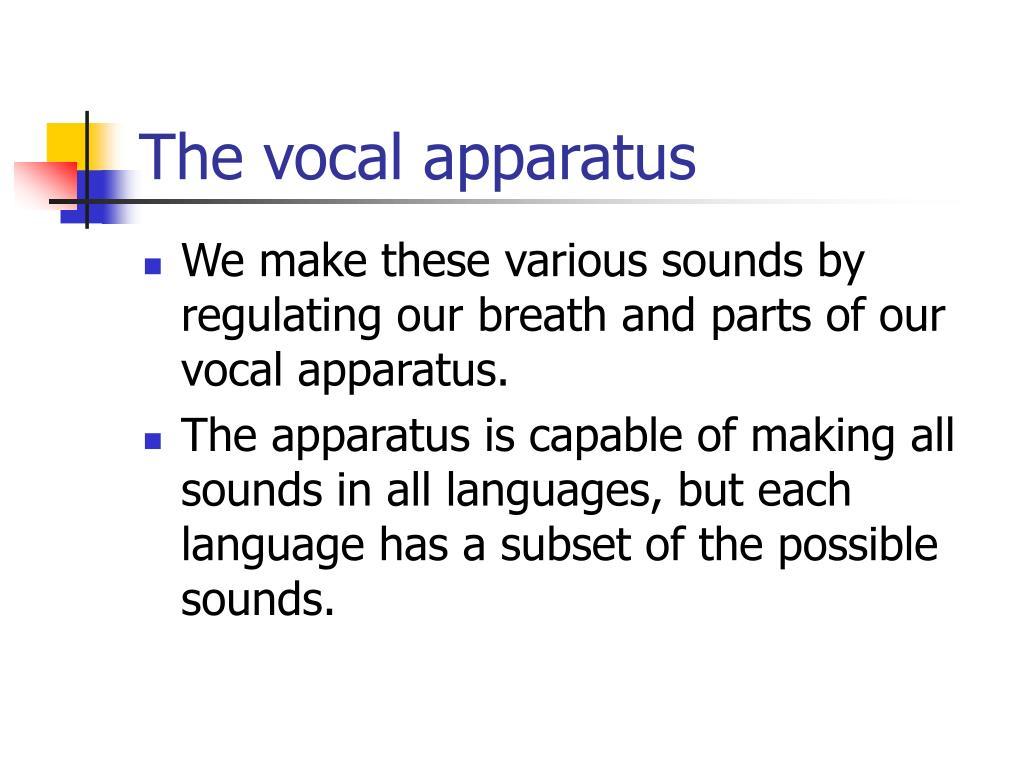 The vocal apparatus