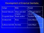 development of external genitalia