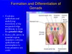 formation and differentiation of gonads