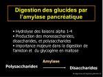 digestion des glucides par l amylase pancr atique