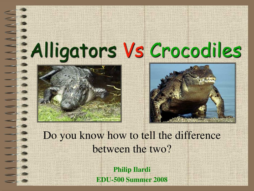 alligators vs crocodiles l.