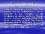 sistemas biol gicos de oxidorreducci n
