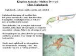 kingdom animalia mullusc diversity class cephalopoda