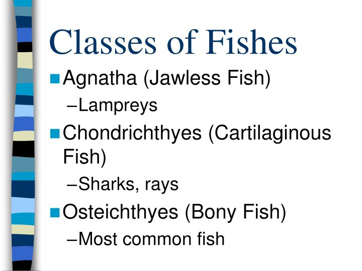 Classes of fishes