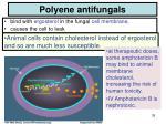 polyene antifungals