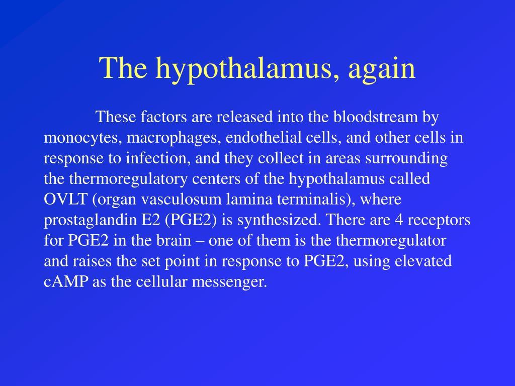 The hypothalamus, again