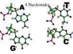 4 nucleotides
