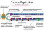 steps in replication
