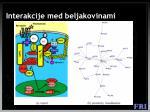 interakcije med beljakovinami