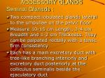accessory glands seminal glansds