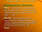 aim of bull selection