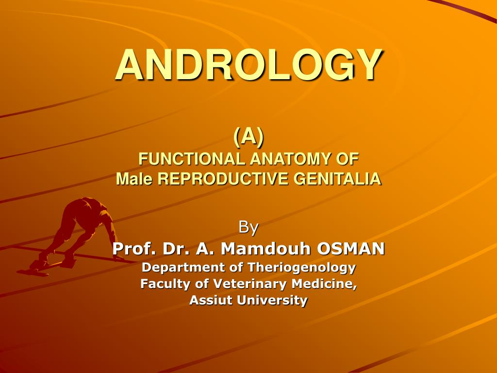 andrology a functional anatomy of male reproductive genitalia l.