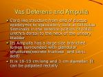 vas deferens and ampulla