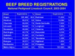 beef breed registrations national pedigreed livestock council 2003 2004