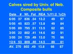 calves sired by univ of neb composite bulls