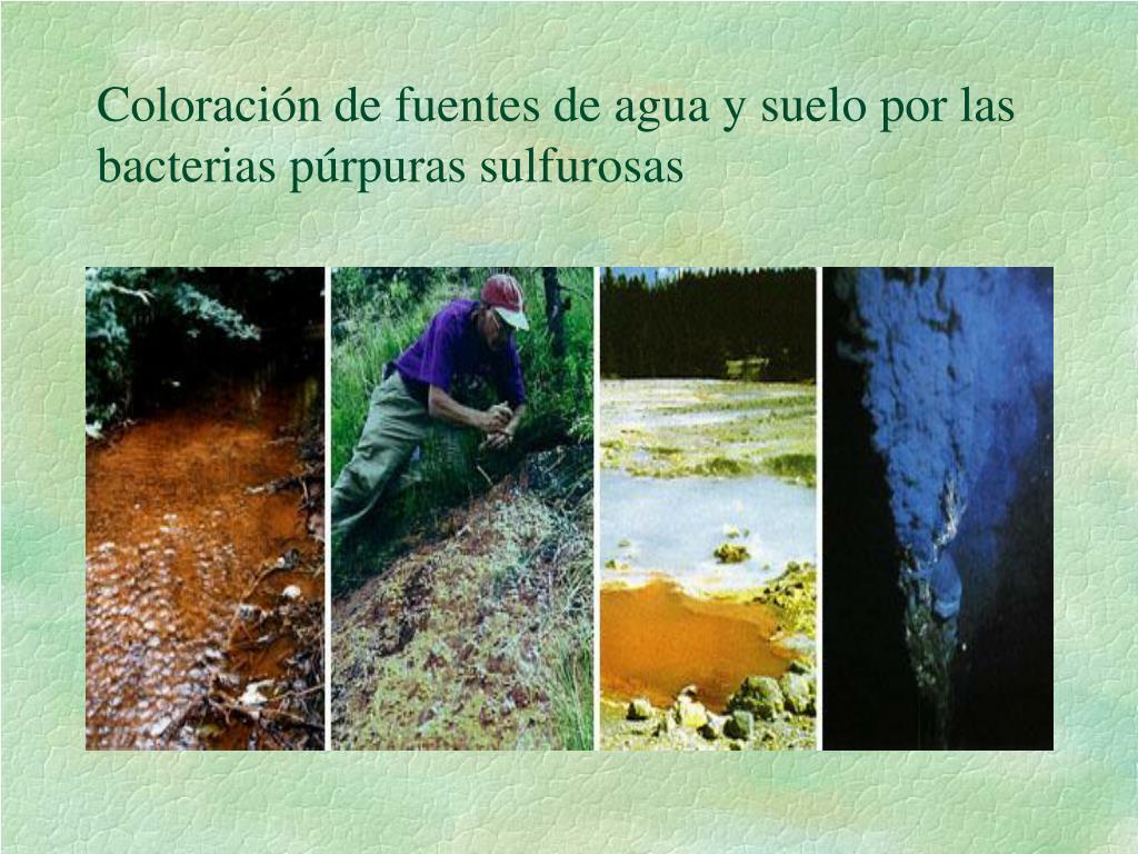 Coloración de fuentes de agua y suelo por las bacterias púrpuras sulfurosas