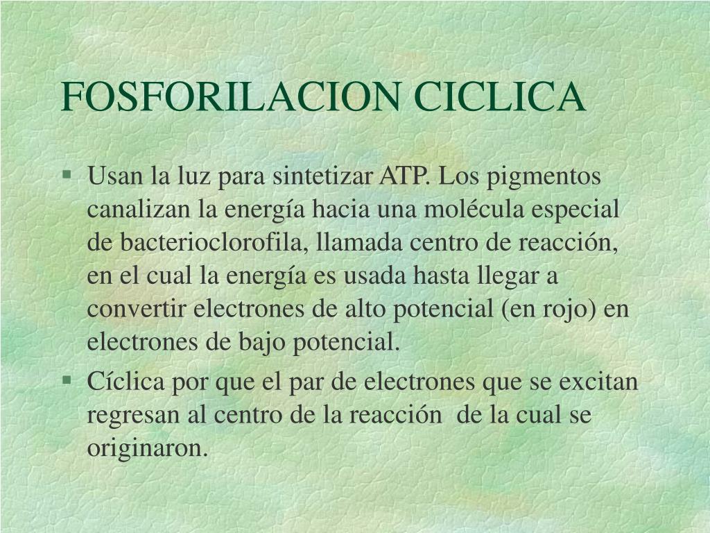 FOSFORILACION CICLICA