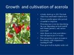 growth and cultivation of acerola