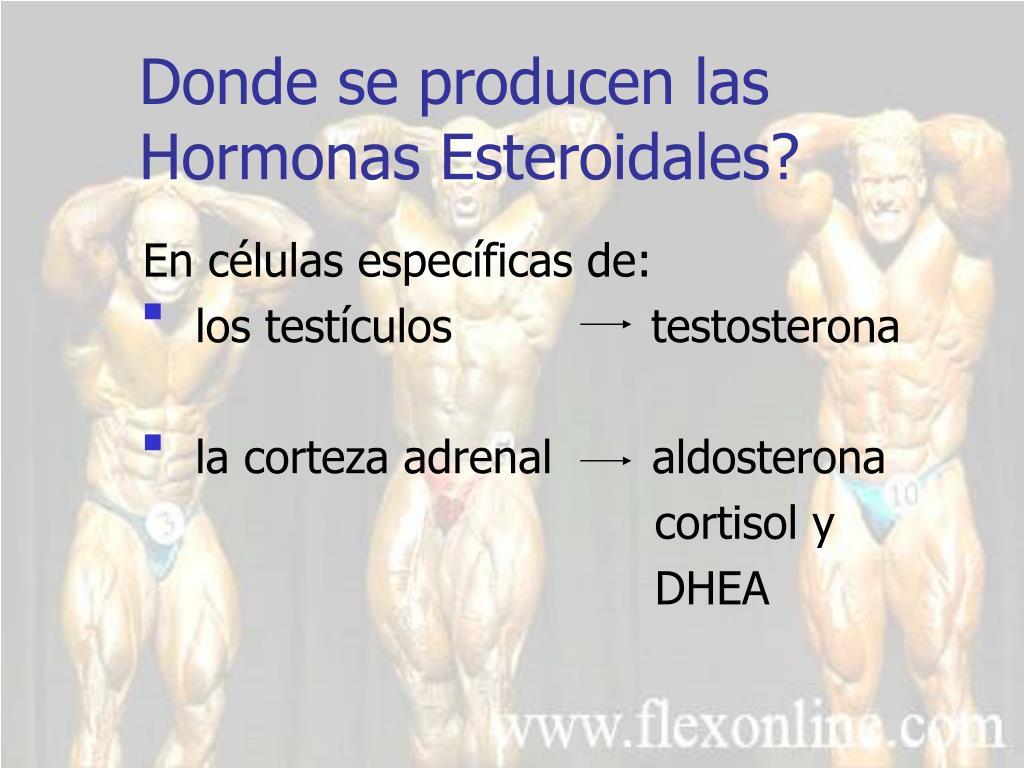 Donde se producen las Hormonas Esteroidales?