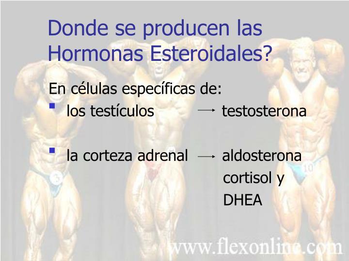 Donde se producen las hormonas esteroidales
