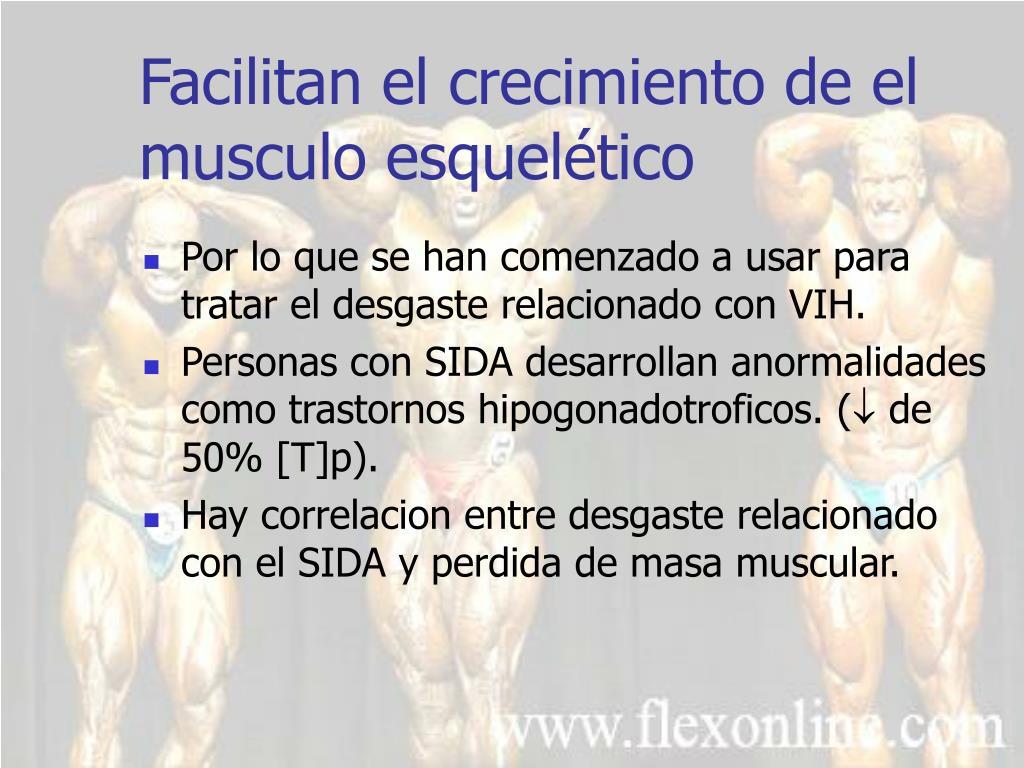 Facilitan el crecimiento de el musculo esquelético