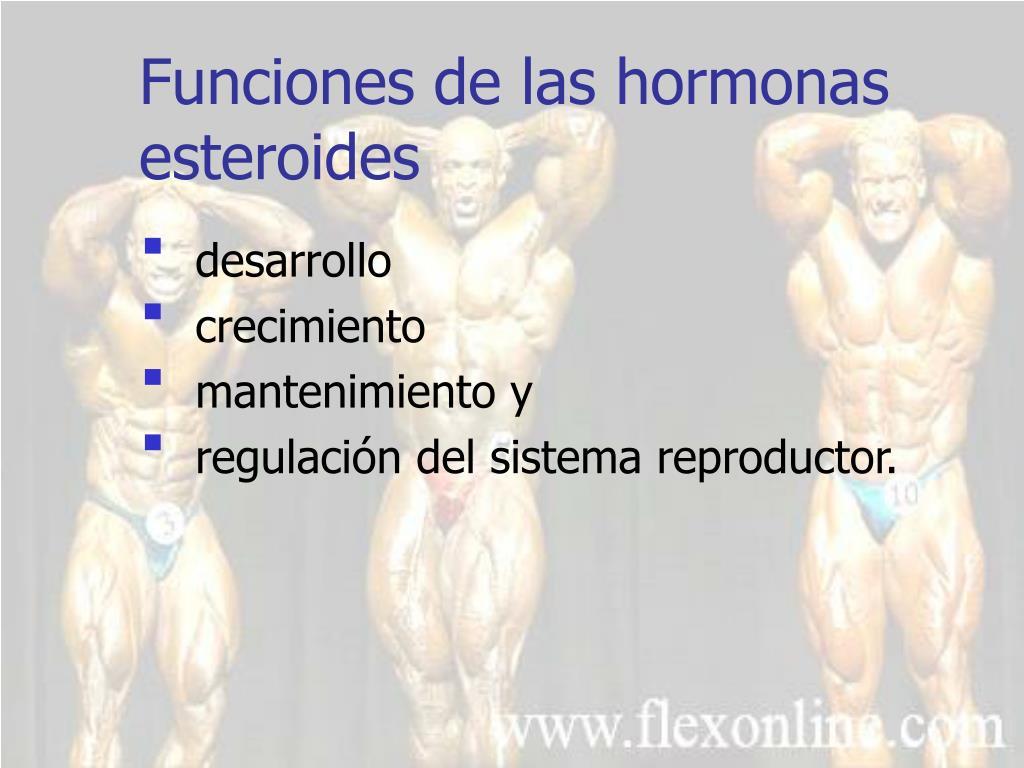 Funciones de las hormonas esteroides