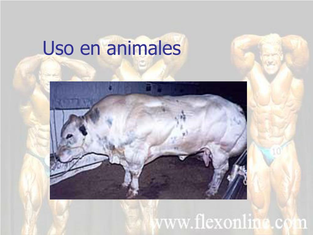 Uso en animales