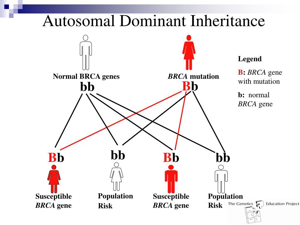 Autosomal Dominant Inheritance