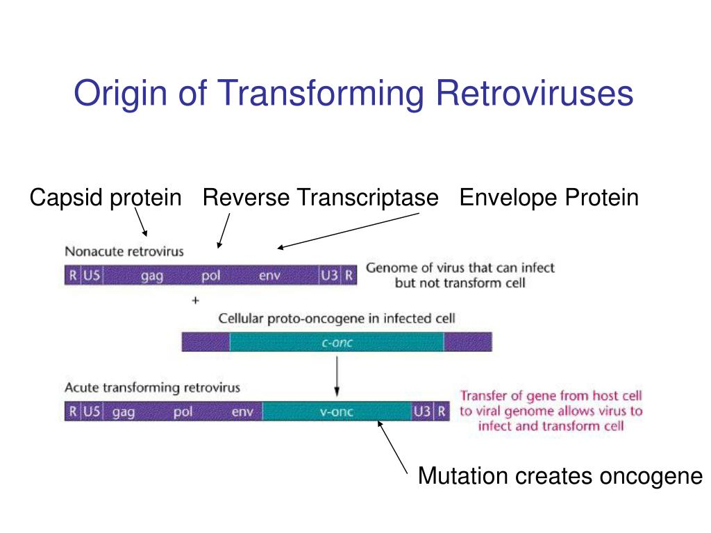 Origin of Transforming Retroviruses
