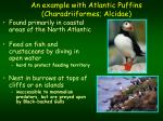an example with atlantic puffins charadriiformes alcidae