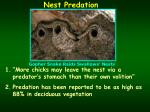 nest predation