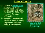 types of nests2