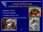 caracter sticas comunes de los primates