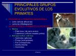 principales grupos evolutivos de los primates