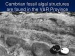 cambrian fossil algal structures are found in the v r province