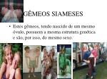 g meos siameses54