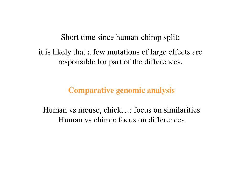 Short time since human-chimp split: