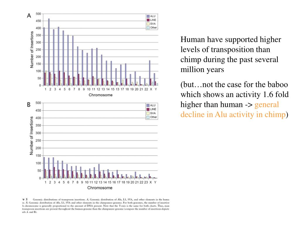 Human have supported higher levels of transposition than chimp during the past several million years