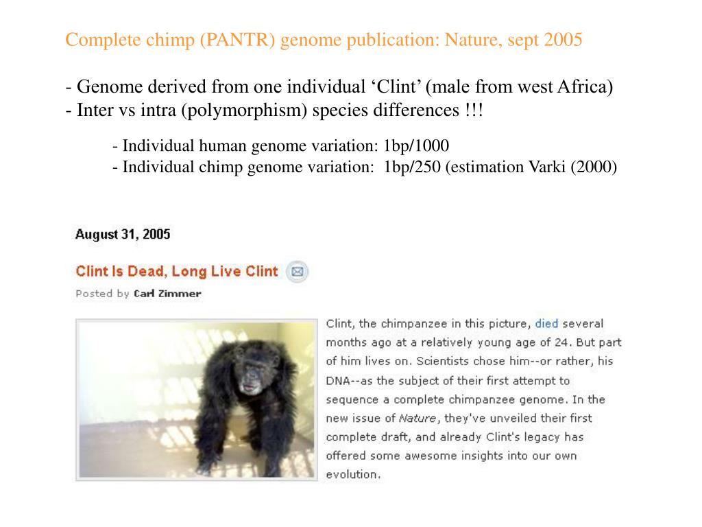 Complete chimp (PANTR) genome publication: Nature, sept 2005