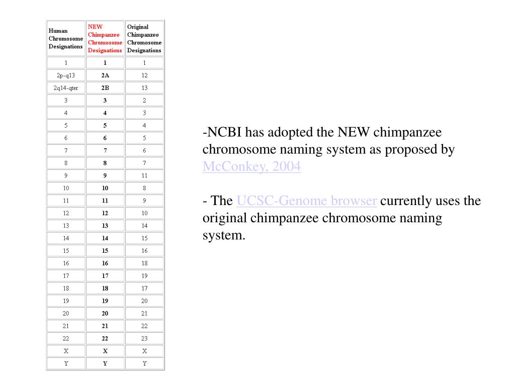 NCBI has adopted the NEW chimpanzee chromosome naming system as proposed by